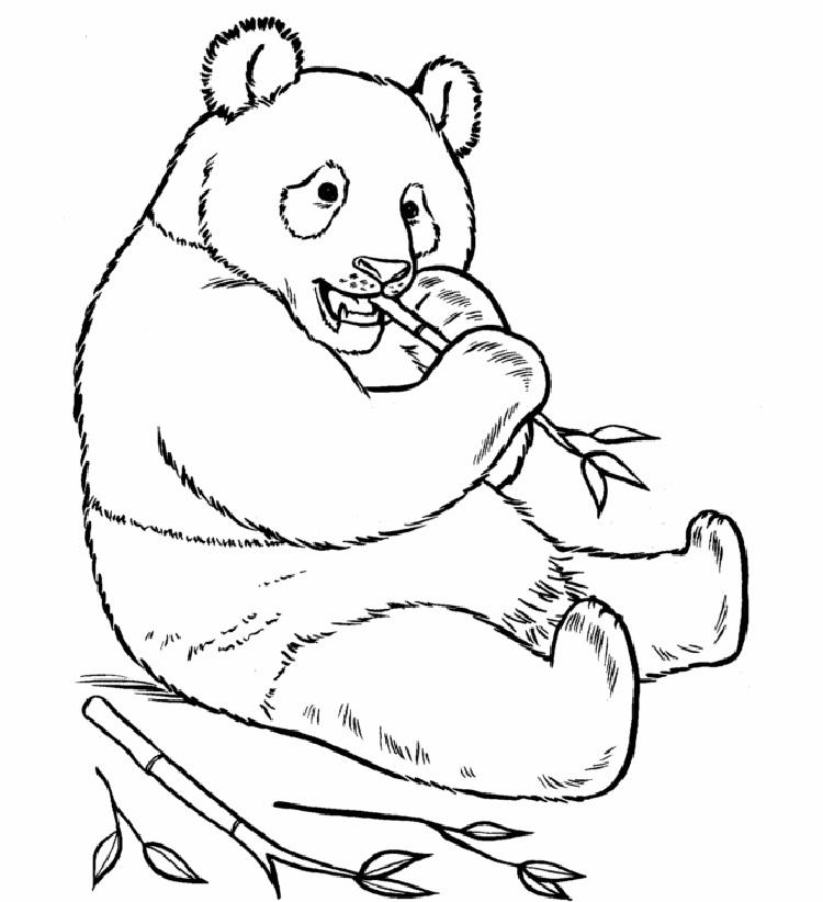 Printable Coloring Pages Of Panda Bears