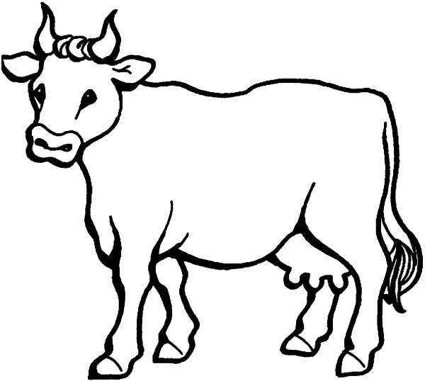 Printable Cow Coloring Pages For Kids
