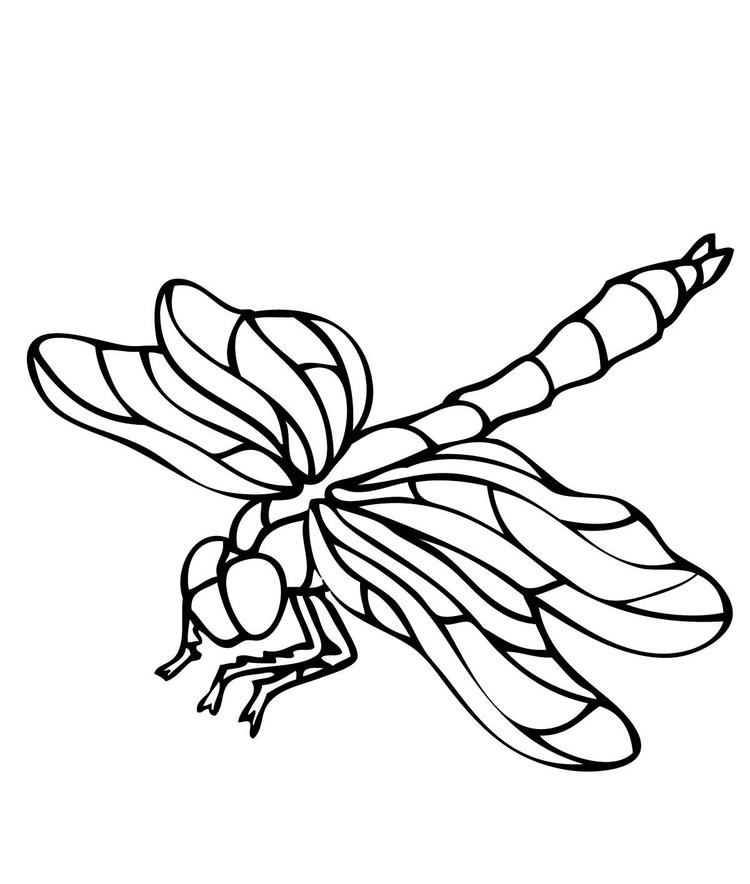 Printable Dragonfly Coloring Pages Of Animals