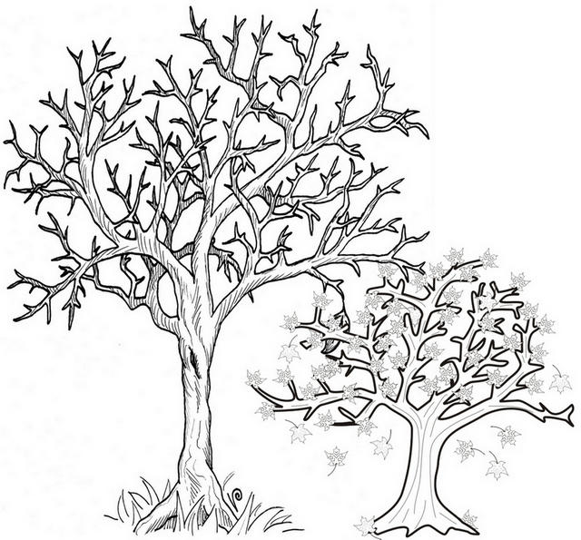 Printable Fall Tree Coloring Page Trees Sheding Their Leaves Coloring Sheet