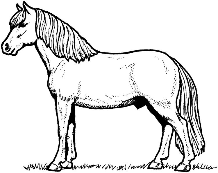 Printable Horse Coloring Pages