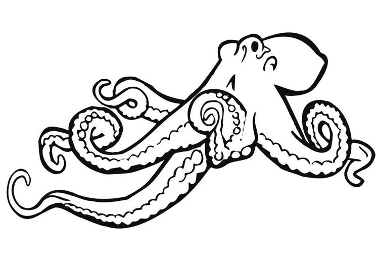 Printable Octopus Coloring Pages