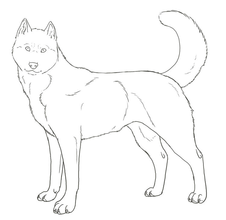 Printable Realistic Husky Coloring Pages