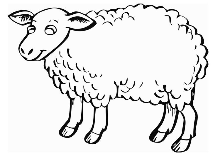 Printable Sheep Coloring Pages