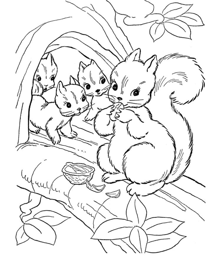 Printable Squirrel Coloring Pages