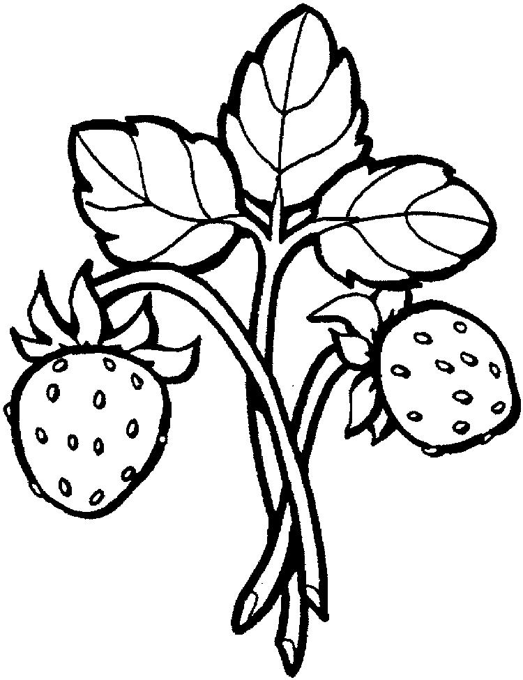Printable Strawberry Fruit Coloring Pages