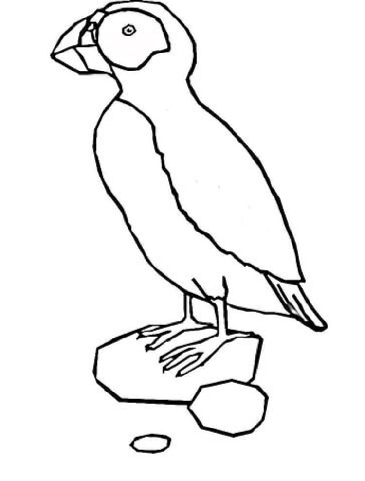 Puffin Bird Coloring Page