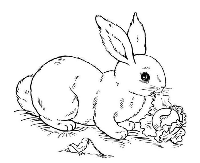Rabbit Coloring Pages To Print