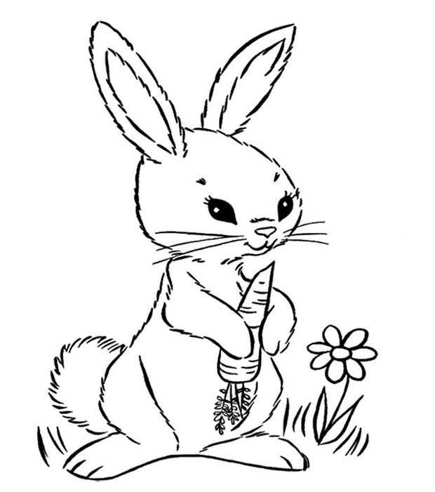 Rabbit Eating Carrot Coloring Page