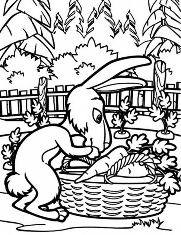 Rabbit Put Some Carrots In A Basket In Mascha And Bear Coloring Pages