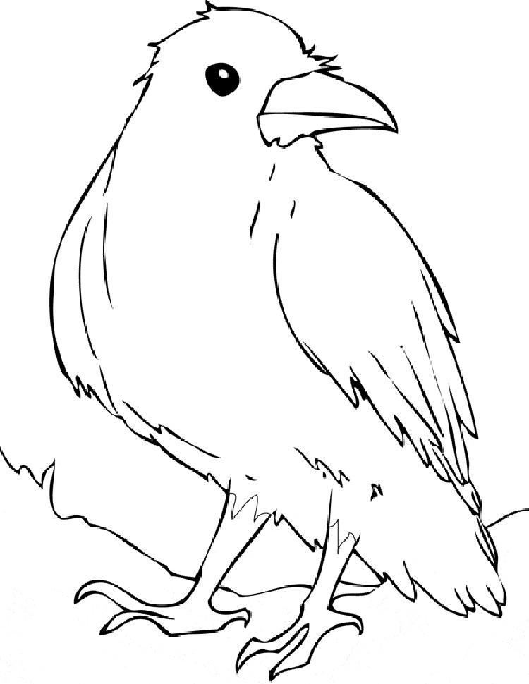 Raven Bird Coloring Page