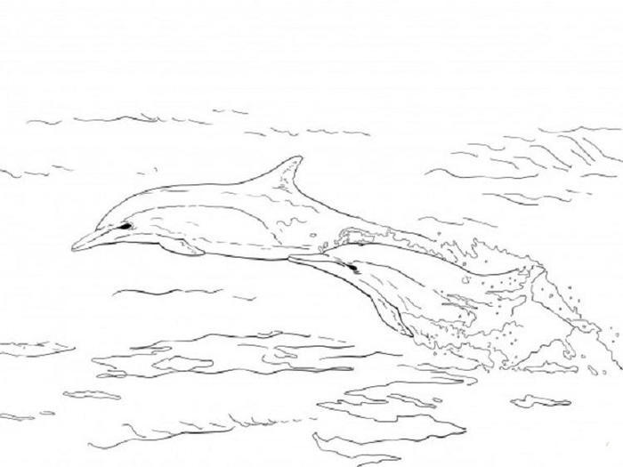 Real Dolphin Coloring Pages