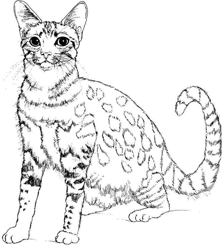 Real Kitten Coloring Pages