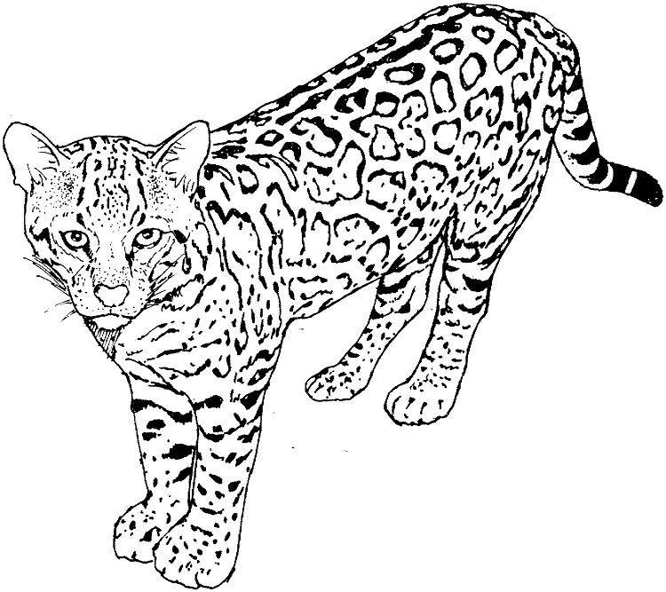 Real Life Cat Coloring Pages