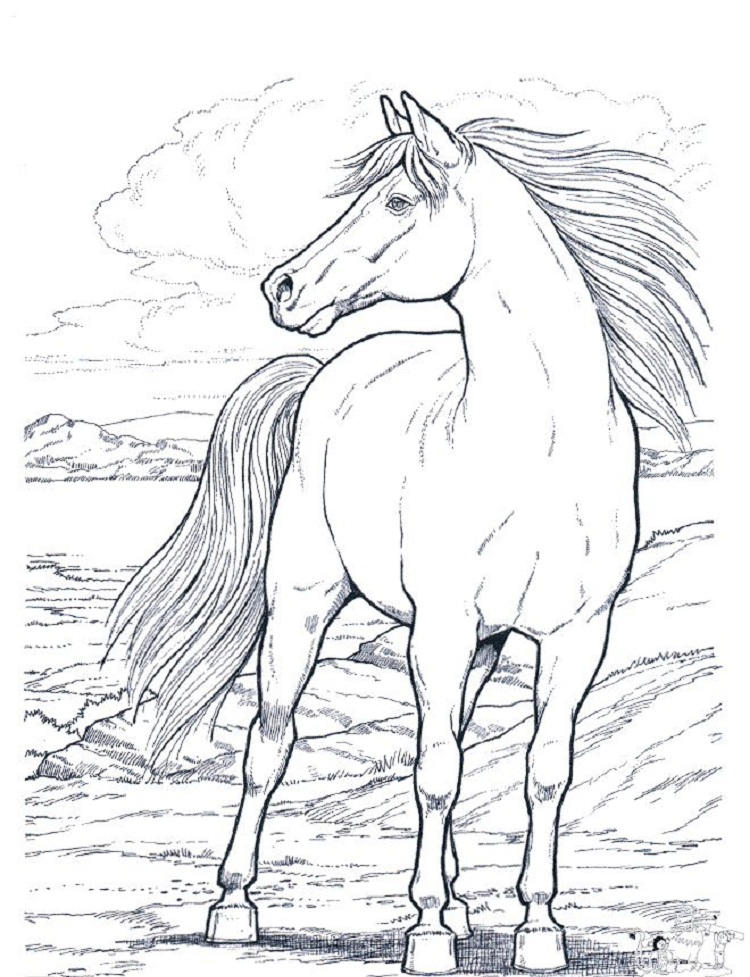 Real Life Horse Coloring Pages