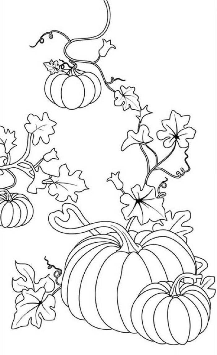 Real Pumpkins Coloring Pages