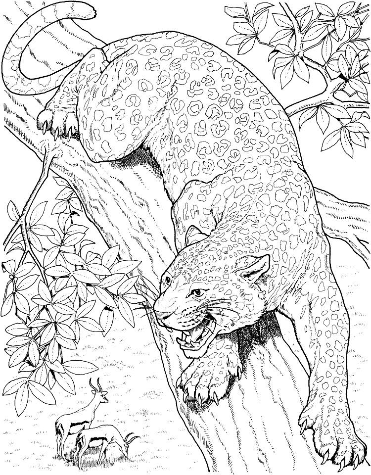Realistic Big Cat Coloring Pages