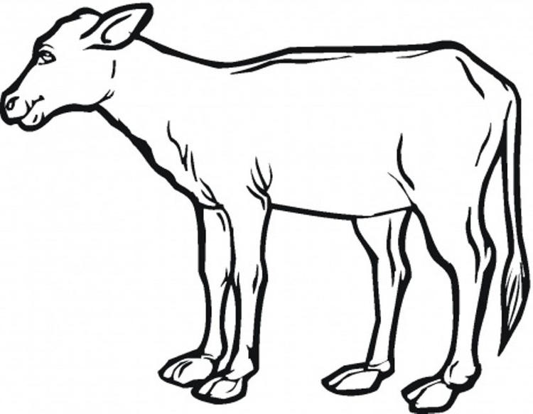 Realistic Calf Farm Animal Coloring Pages