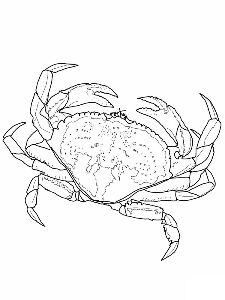 Realistic Crab Coloring Pages
