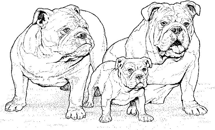 Realistic Dog Breeds Colouring Pages