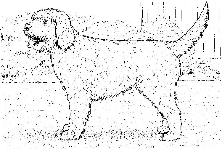 Realistic Dog Coloring Pages For Kids
