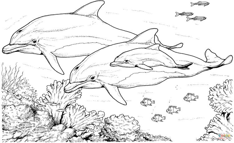 Realistic Dolphin Coloring Pages For Adults