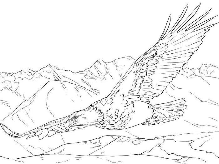 Realistic Eagles Coloring Pages