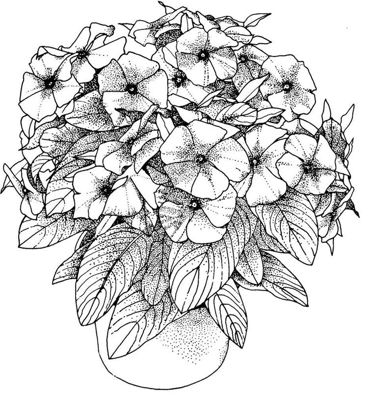Realistic Floral Coloring Pages