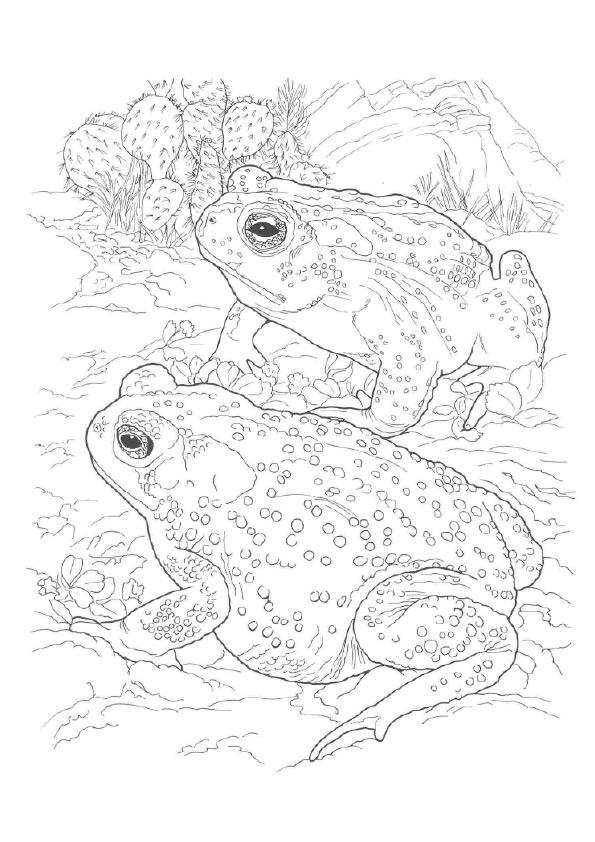 Realistic Frog Coloring Pages For Adults