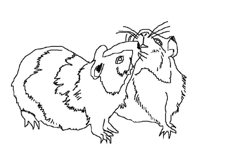 Realistic Hamster Coloring Pages Couple