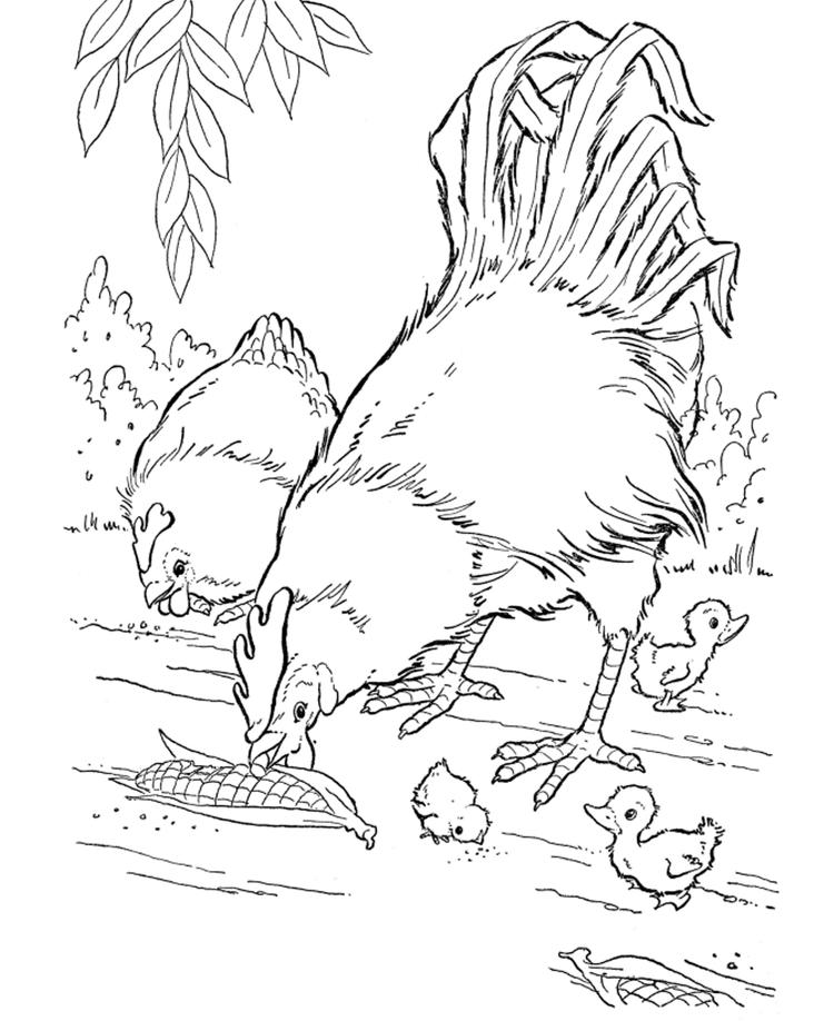 Realistic Hen And Rooster Farm Animal Coloring Pages