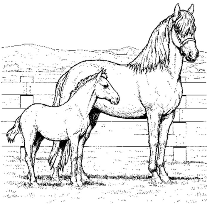 Realistic Horse Coloring Pages Mom And Baby
