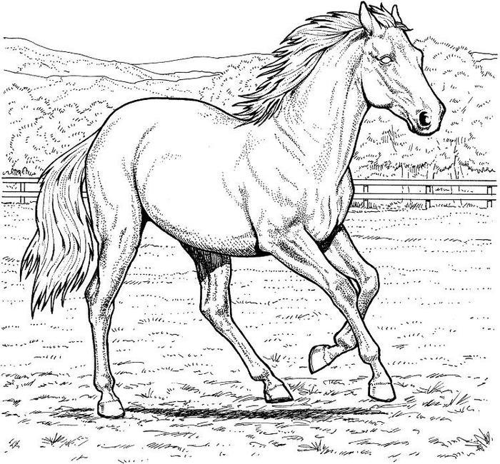 Realistic Horses Coloring Pages