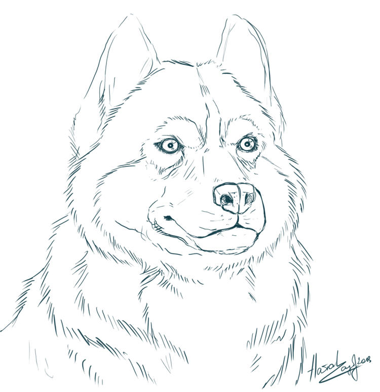 Realistic Husky Coloring Pages For Kids