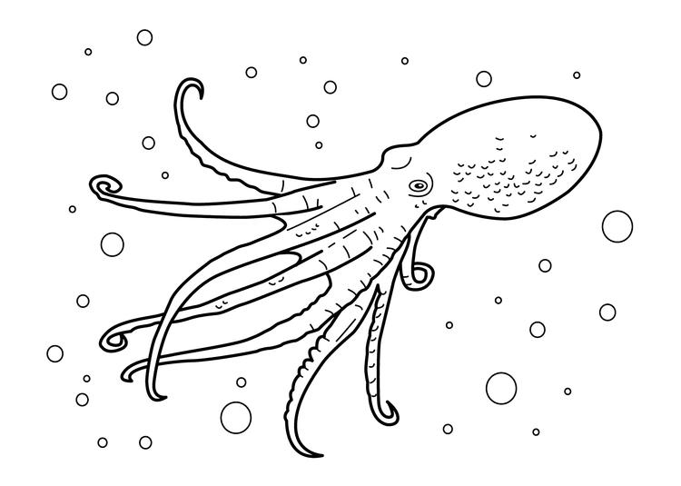 Realistic Octopus Coloring Pages Underwater