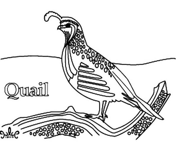 Realistic Of Quail Coloring Picture