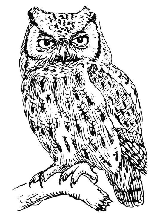 Realistic Owl Coloring Pages