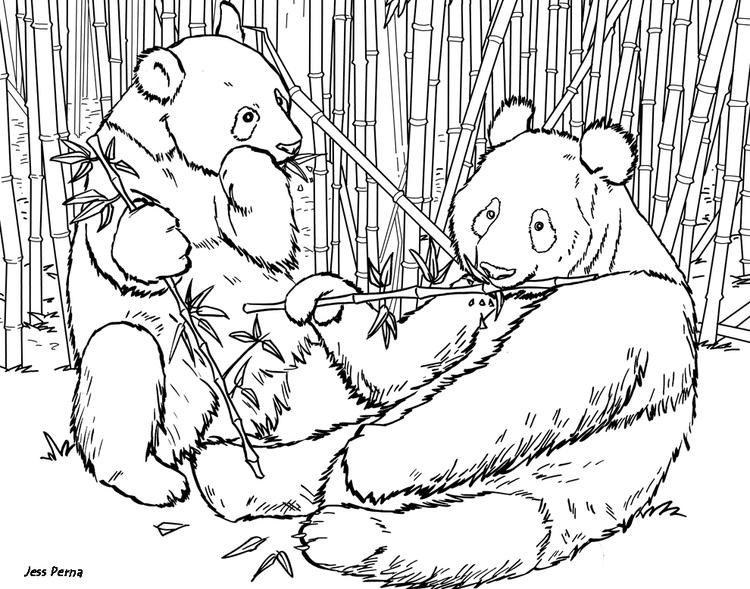 Realistic Panda Coloring Pages For Adults