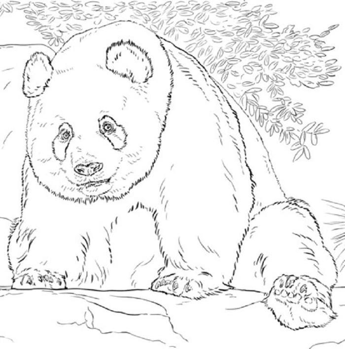 Realistic Panda Coloring Pages