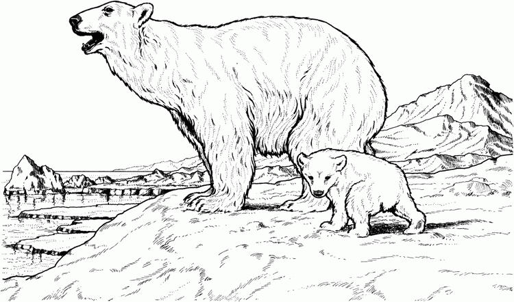 Realistic Polar Bear Coloring Pages In North Pole