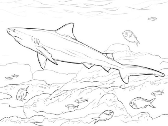 Realistic Shark Coloring Pages