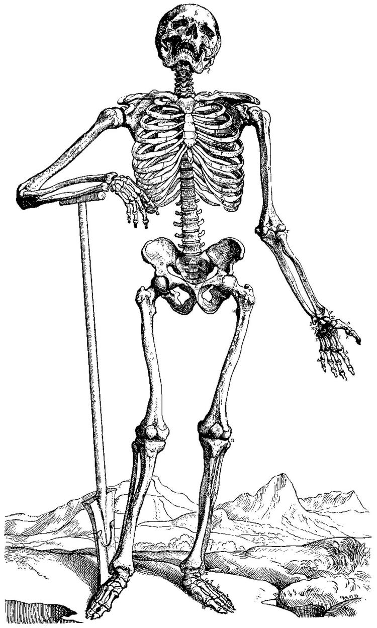 Realistic Skeleton Coloring Pages