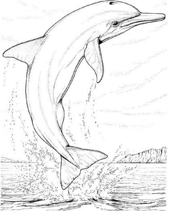 Realistic Wildlife Coloring Pages