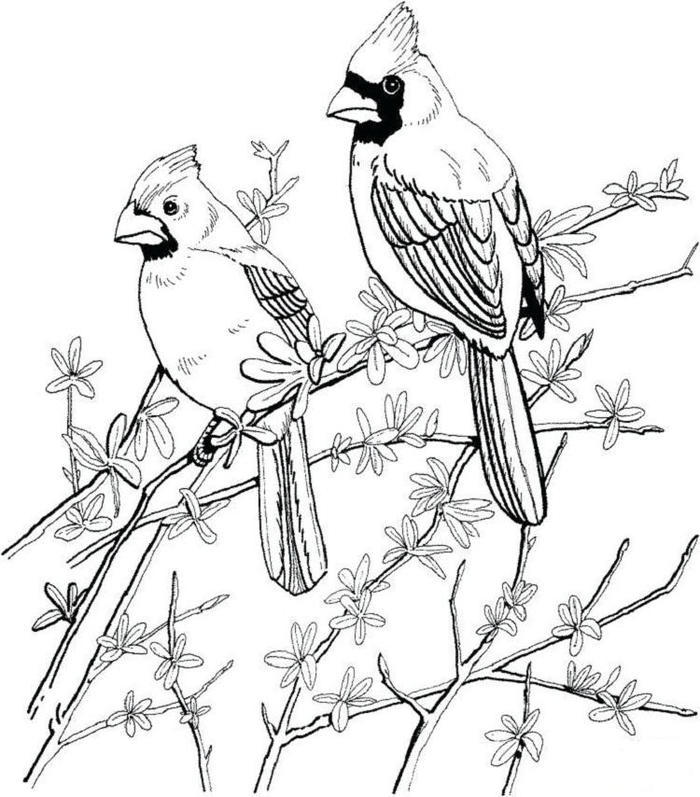 Red Bird Coloring Pages