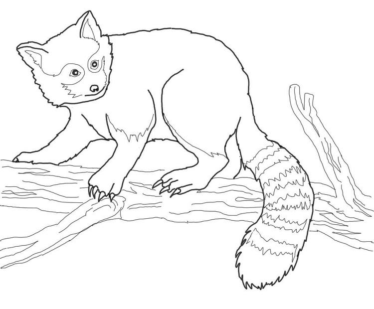 Red Panda Coloring Pages Free