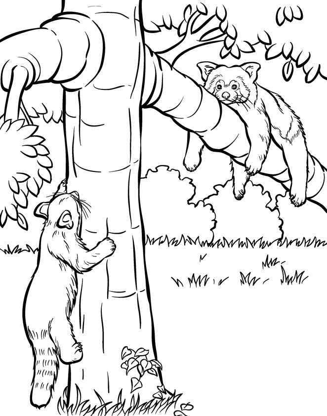 Red Panda Coloring Pages On Tree