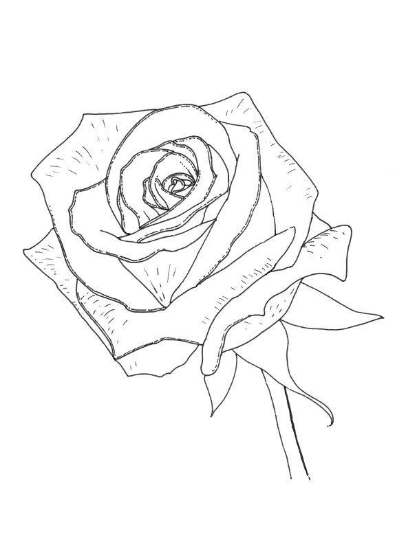 Rose Coloring Pages Free