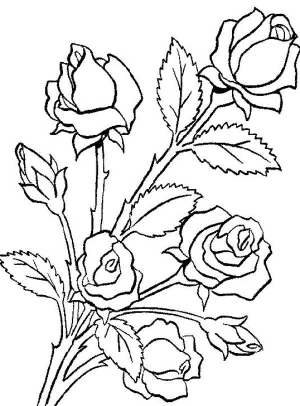 Rose Coloring Pages Printable Free