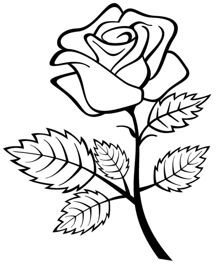 Rose Coloring Pages Queen Of Flowers