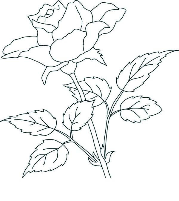 Rose Flower Coloring Pages For Kids
